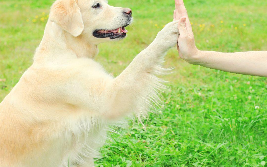 Hunden – hälsans bästa vän