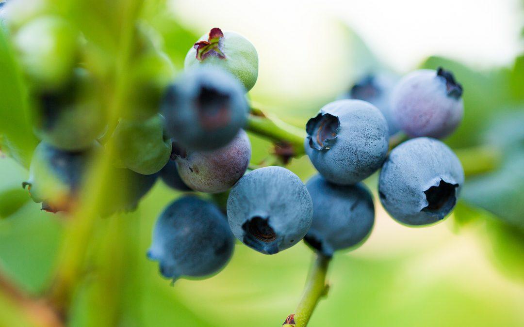 Nyttig och mättande smoothie med blåbär